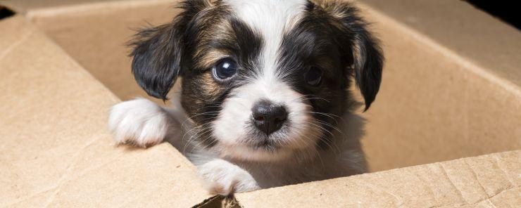 Mudanzas con perros. Cómo hacer más llevadero el traslado del hogar
