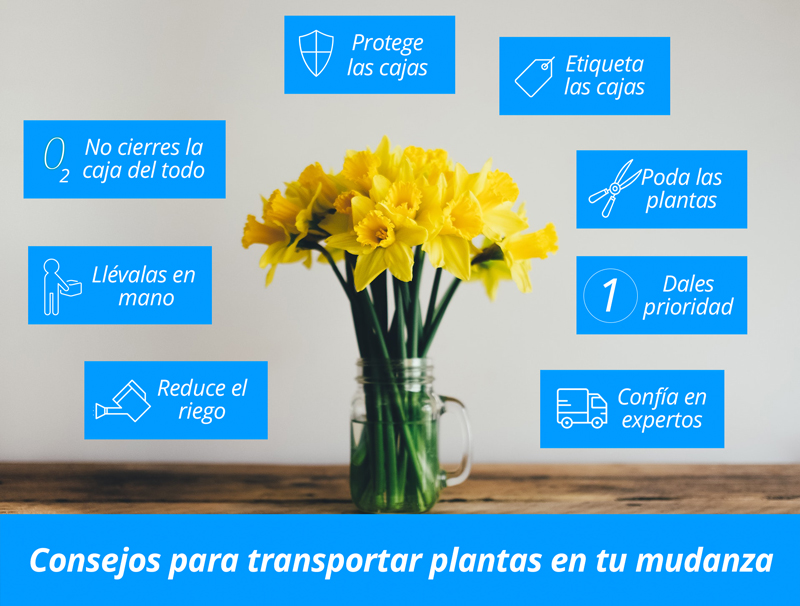 transportar plantas mudanza